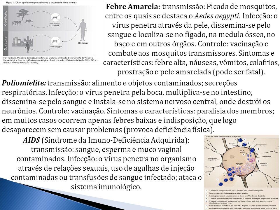 Febre Amarela: transmissão: Picada de mosquitos, entre os quais se destaca o Aedes aegypti. Infecção: o vírus penetra através da pele, dissemina-se pe