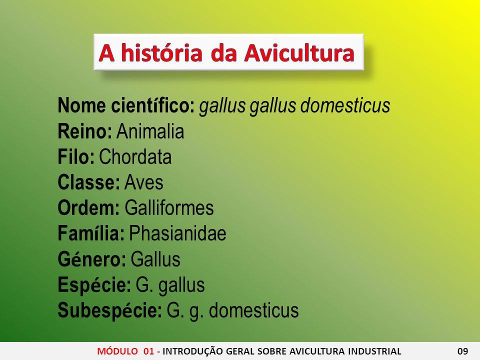 Nome cient í fico: gallus gallus domesticus Reino: Animalia Filo: Chordata Classe: Aves Ordem: Galliformes Fam í lia: Phasianidae G é nero: Gallus Esp