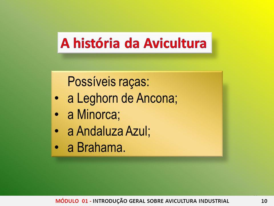 11 Possíveis raças: a Leghorn de Ancona; a Minorca; a Andaluza Azul; a Brahama. MÓDULO 01 - INTRODUÇÃO GERAL SOBRE AVICULTURA INDUSTRIAL 10