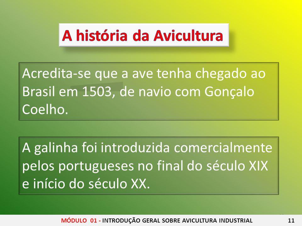 12 A galinha foi introduzida comercialmente pelos portugueses no final do século XIX e início do século XX. Acredita-se que a ave tenha chegado ao Bra