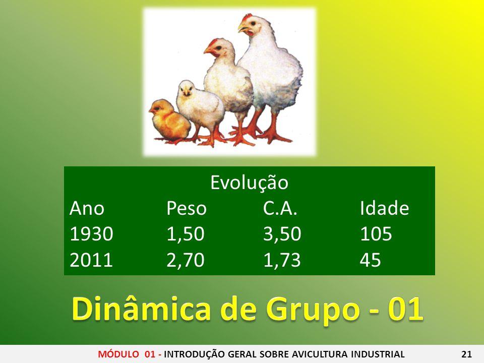 MÓDULO 01 - INTRODUÇÃO GERAL SOBRE AVICULTURA INDUSTRIAL 21 Evolução AnoPesoC.A.Idade 19301,50 3,50105 20112,701,7345