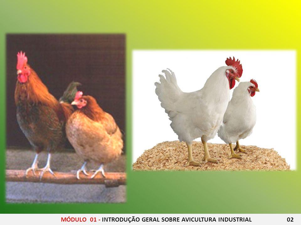 14 Avicultor, Oswaldo de Siqueira, do Rio, escreveu amplamente sobre a cria ç ão de galinhas e traduziu a Cartinha Av í cola, de Biedma-Portugal.