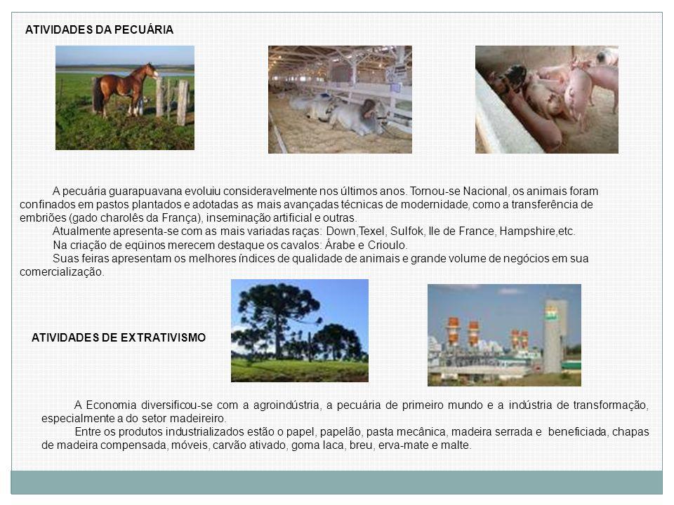 ATIVIDADES DA PECUÁRIA A pecuária guarapuavana evoluiu consideravelmente nos últimos anos. Tornou-se Nacional, os animais foram confinados em pastos p