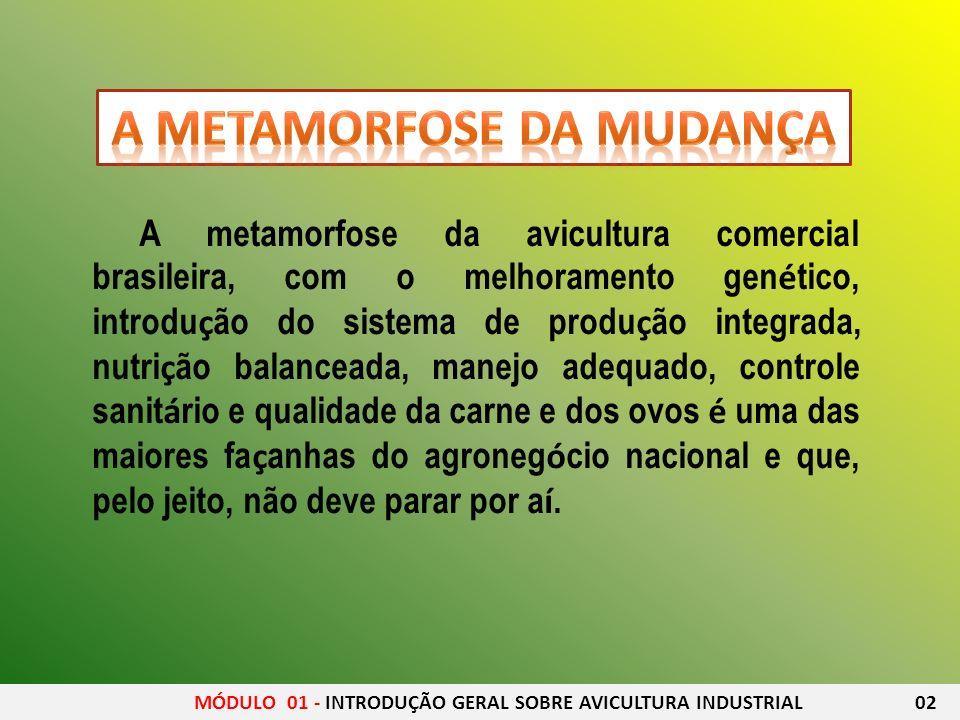 MÓDULO 01 - INTRODUÇÃO GERAL SOBRE AVICULTURA INDUSTRIAL 02 A metamorfose da avicultura comercial brasileira, com o melhoramento gen é tico, introdu ç