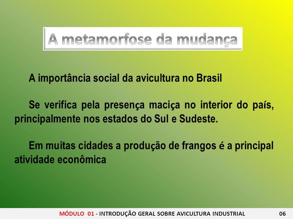 7 A importância social da avicultura no Brasil Se verifica pela presen ç a maci ç a no interior do pa í s, principalmente nos estados do Sul e Sudeste