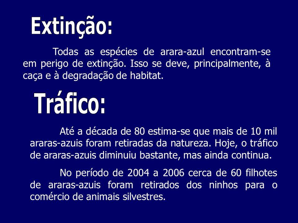 Até a década de 80 estima-se que mais de 10 mil araras-azuis foram retiradas da natureza. Hoje, o tráfico de araras-azuis diminuiu bastante, mas ainda