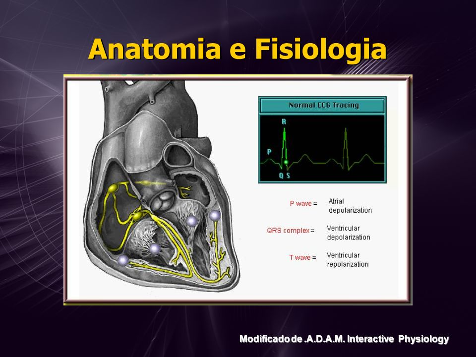 Anatomia e Fisiologia Modificado de.A.D.A.M. Interactive Physiology