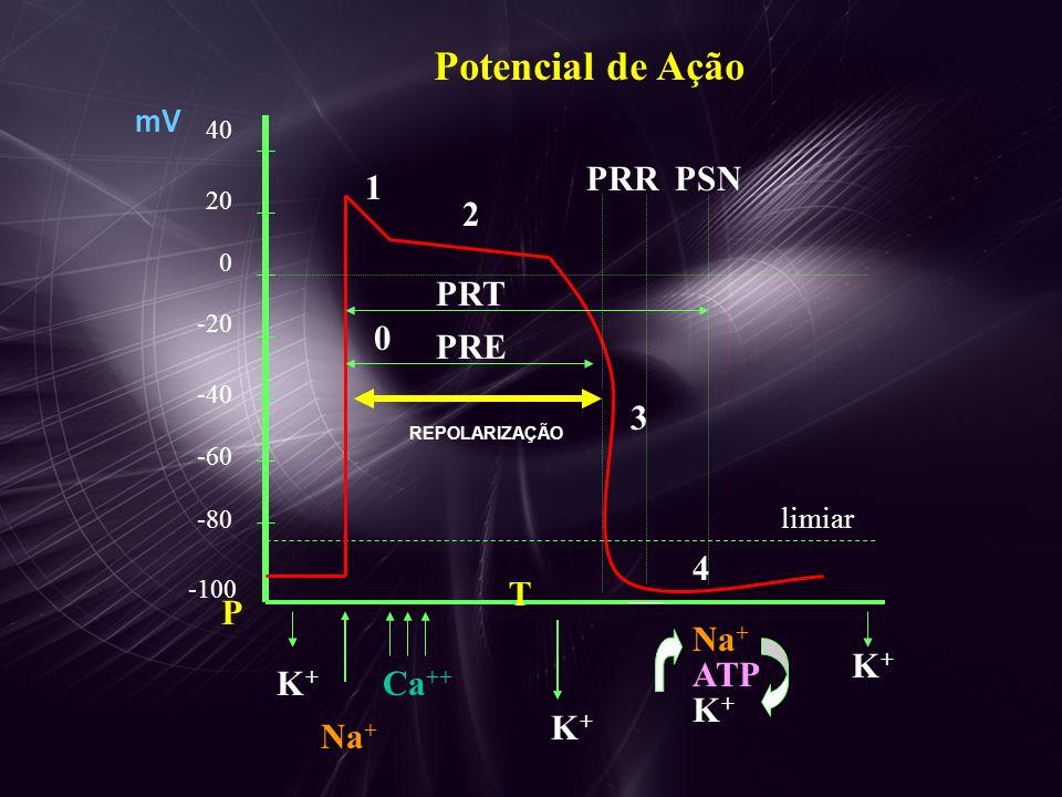 40 20 0 -20 -40 -60 -80 -100 Na + 0 1 2 3 4 limiar Ca ++ K+K+ K + K+K+ K + Na + ATP REPOLARIZAÇÃO PRR PRE PRT PSN mV Potencial de Ação P T