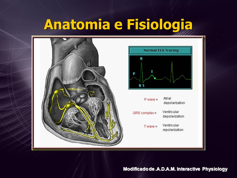 Anatomia e Fisiologia Modificado de.A.D.A.M. Interactive Physiology