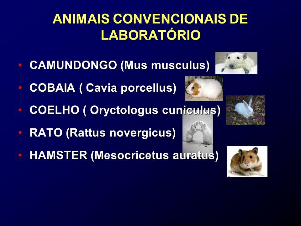 Animais Convencionais São animais que possuem microbiota indefinida por serem mantidos em ambiente desprovido de barreiras sanitárias rigorosas Sua criação apresenta apenas princípios básicos de higiene Animais Convencionais Animais Convencionais CLASSIFICAÇÃO SANITÁRIA DOS ANIMAIS DE LABORATÓRIO