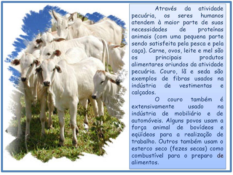 Através da atividade pecuária, os seres humanos atendem à maior parte de suas necessidades de proteínas animais (com uma pequena parte sendo satisfeita pela pesca e pela caça).
