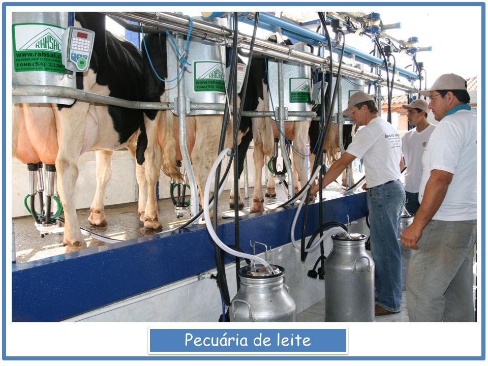 Pecuária de leite