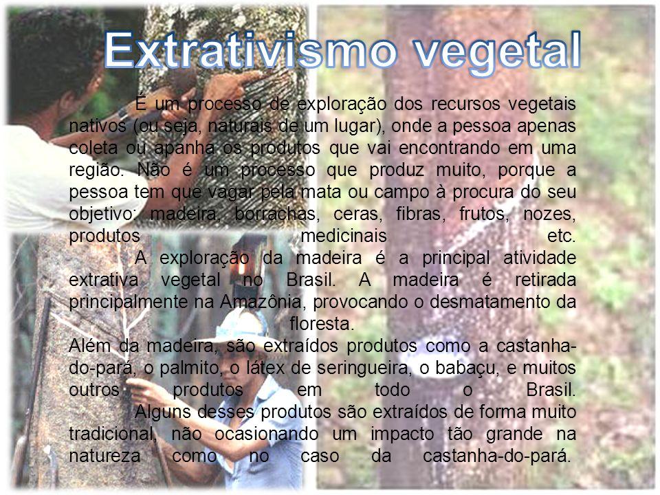 É um processo de exploração dos recursos vegetais nativos (ou seja, naturais de um lugar), onde a pessoa apenas coleta ou apanha os produtos que vai encontrando em uma região.