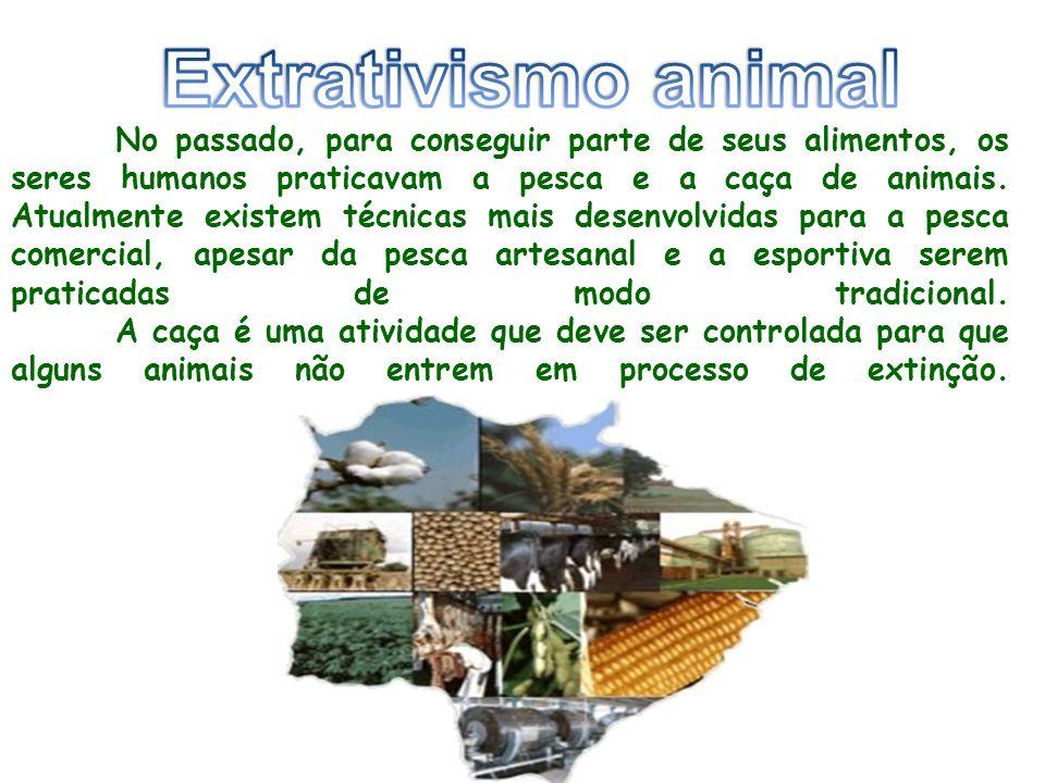 No passado, para conseguir parte de seus alimentos, os seres humanos praticavam a pesca e a caça de animais.
