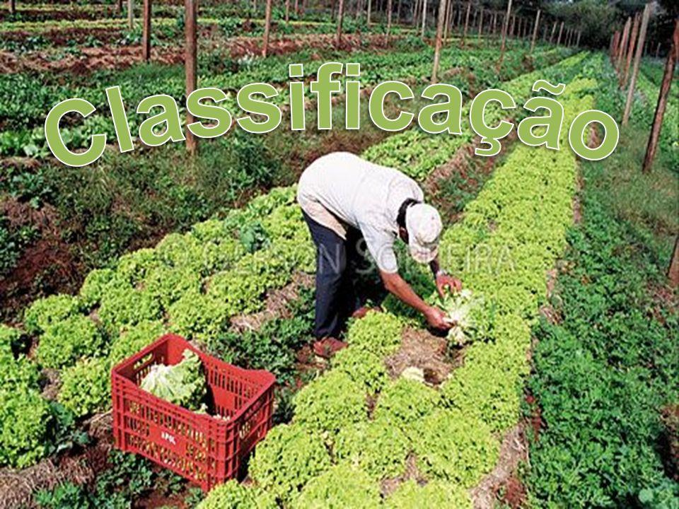 Extrativismo significa resumidamente São as atividades de coleta de produtos naturais, sejam estes produtos de origem vegetal, animal, ou mineral.