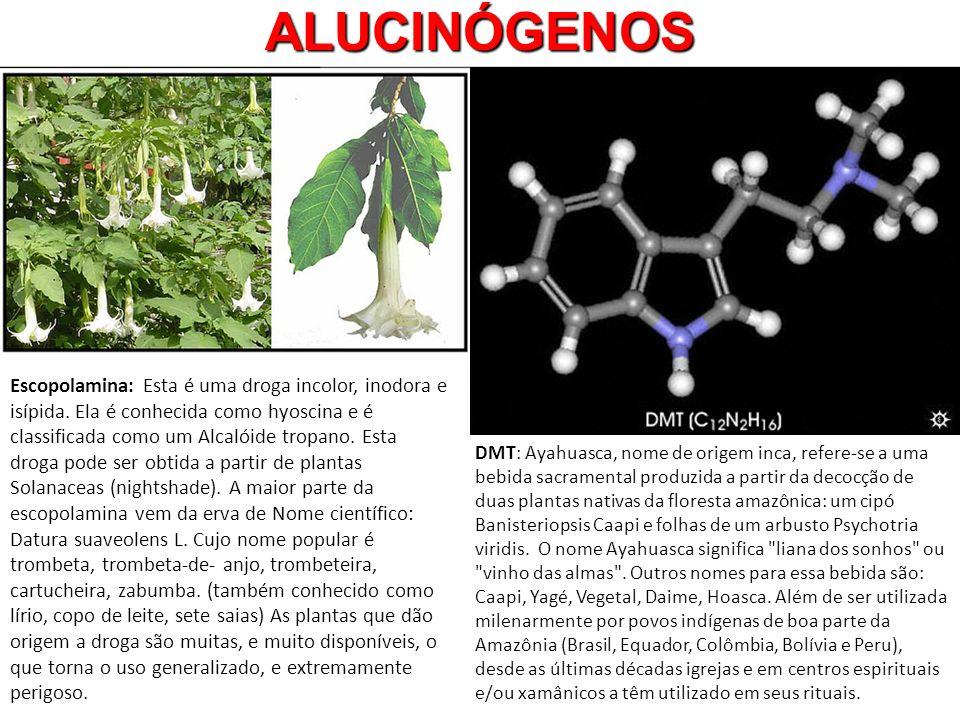 ALUCINÓGENOS DMT: Ayahuasca, nome de origem inca, refere-se a uma bebida sacramental produzida a partir da decocção de duas plantas nativas da florest