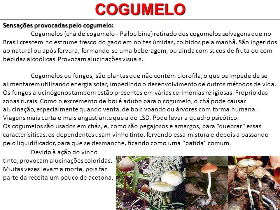 COGUMELO Sensações provocadas pelo cogumelo: Cogumelos (chá de cogumelo - Psilocibina) retirado dos cogumelos selvagens que no Brasil crescem no estru