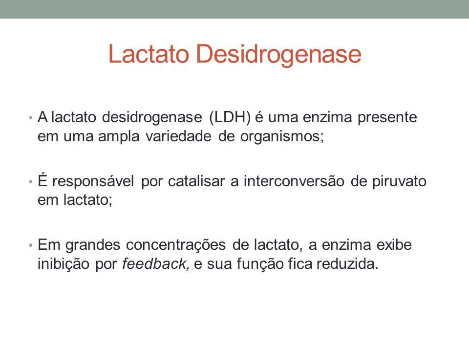 Lactato Desidrogenase A lactato desidrogenase (LDH) é uma enzima presente em uma ampla variedade de organismos; É responsável por catalisar a intercon