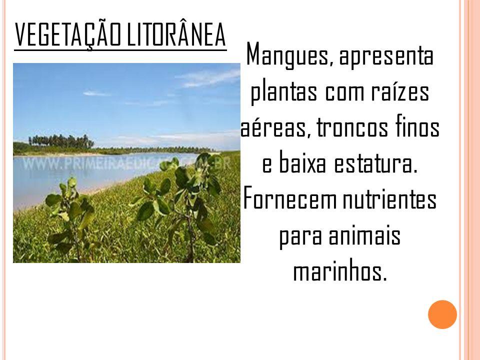 VEGETAÇÃO LITORÂNEA Mangues, apresenta plantas com raízes aéreas, troncos finos e baixa estatura. Fornecem nutrientes para animais marinhos.
