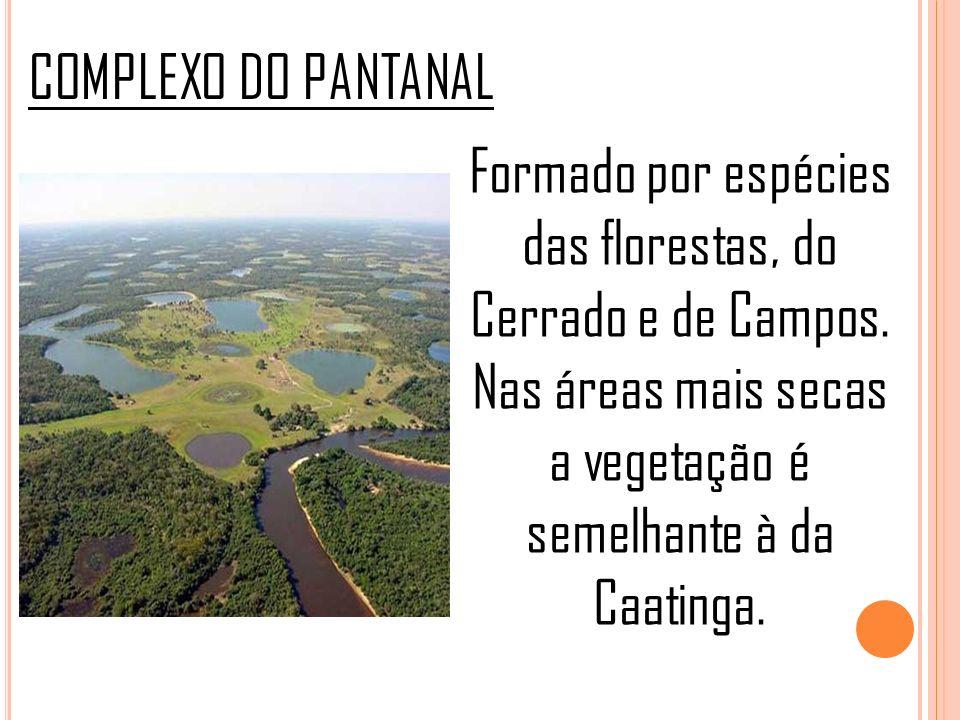 COMPLEXO DO PANTANAL Formado por espécies das florestas, do Cerrado e de Campos. Nas áreas mais secas a vegetação é semelhante à da Caatinga.