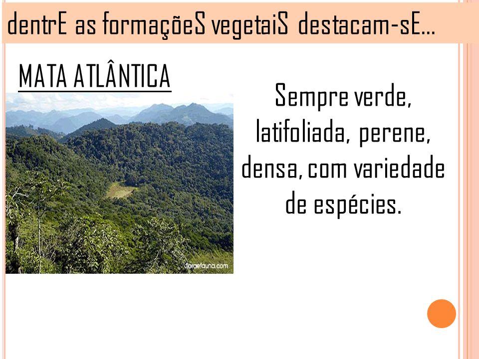 dentrE as formaçõeS vegetaiS destacam-sE... MATA ATLÂNTICA Sempre verde, latifoliada, perene, densa, com variedade de espécies.