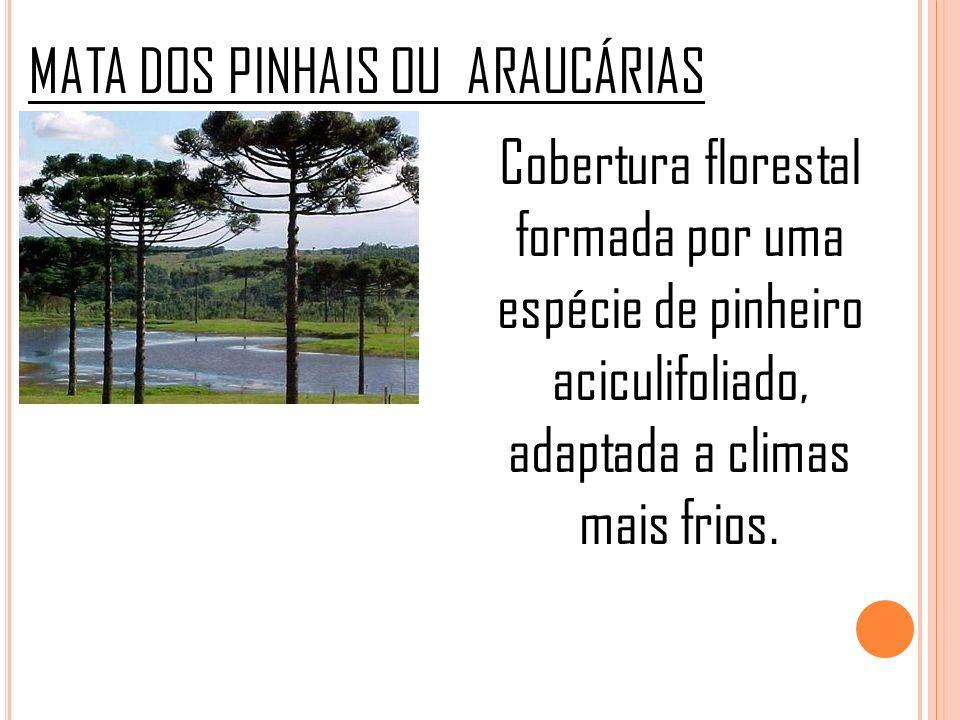CERRADO Composta por árvores baixas, de casca grossa e tronco retorcido, arbustos e vegetações rasteiras.