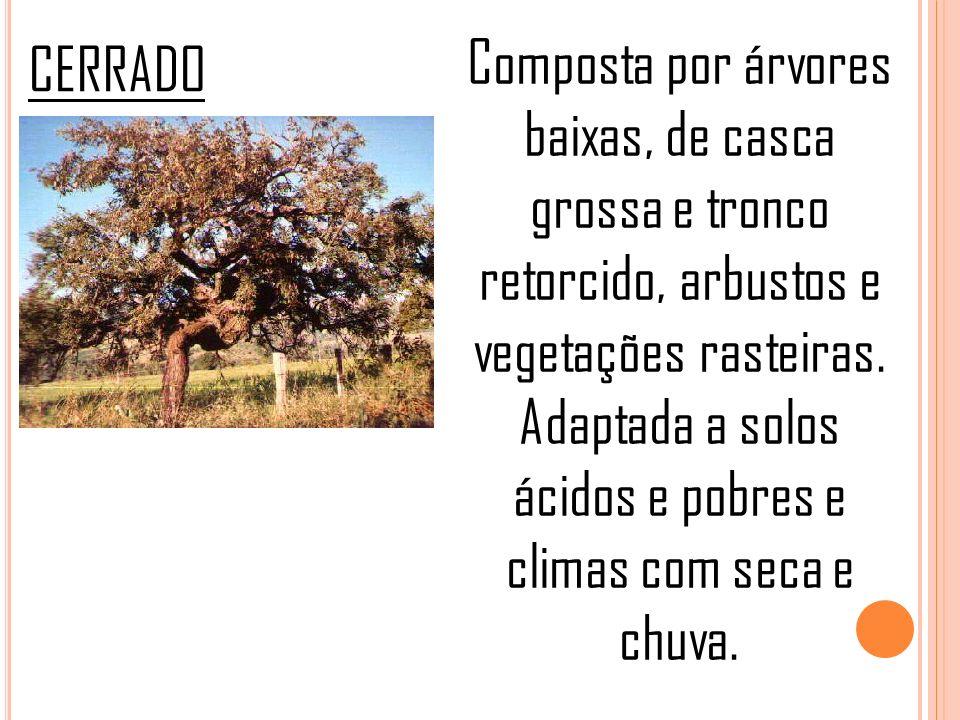 CERRADO Composta por árvores baixas, de casca grossa e tronco retorcido, arbustos e vegetações rasteiras. Adaptada a solos ácidos e pobres e climas co