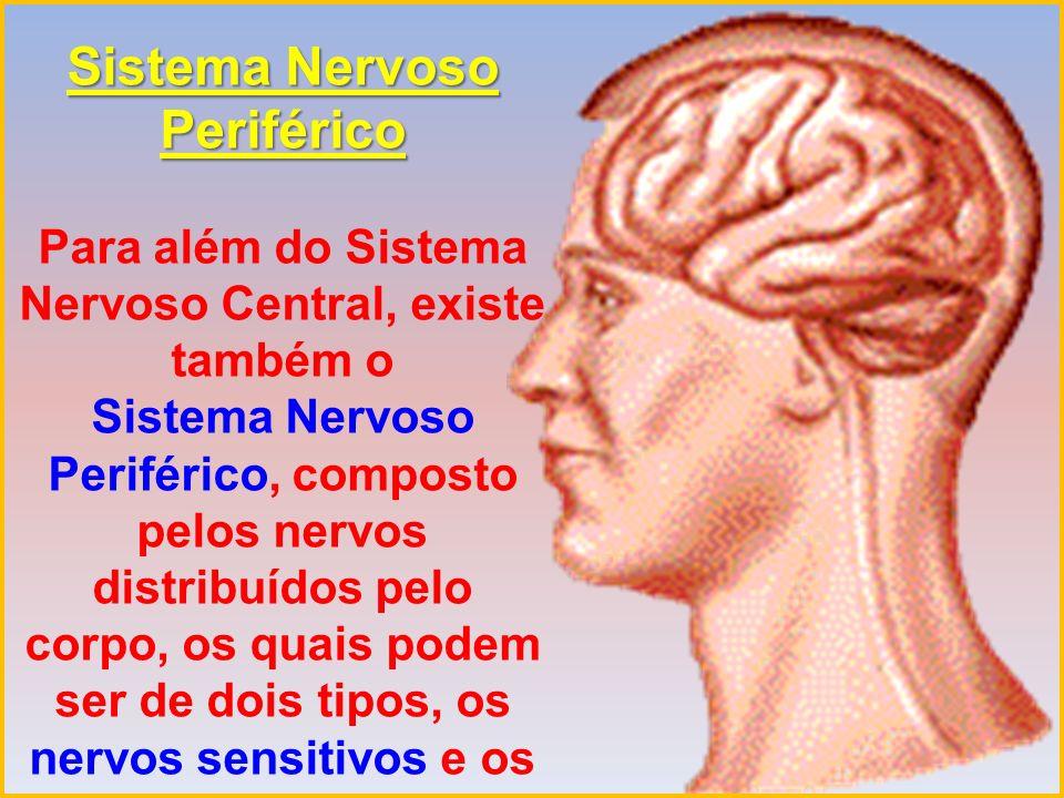 Os nervos sensitivos conduzem as informações da periferia para o Sistema Nervoso Central, por exemplo acerca do que se vê, ouve, cheira, sente e saboreia.