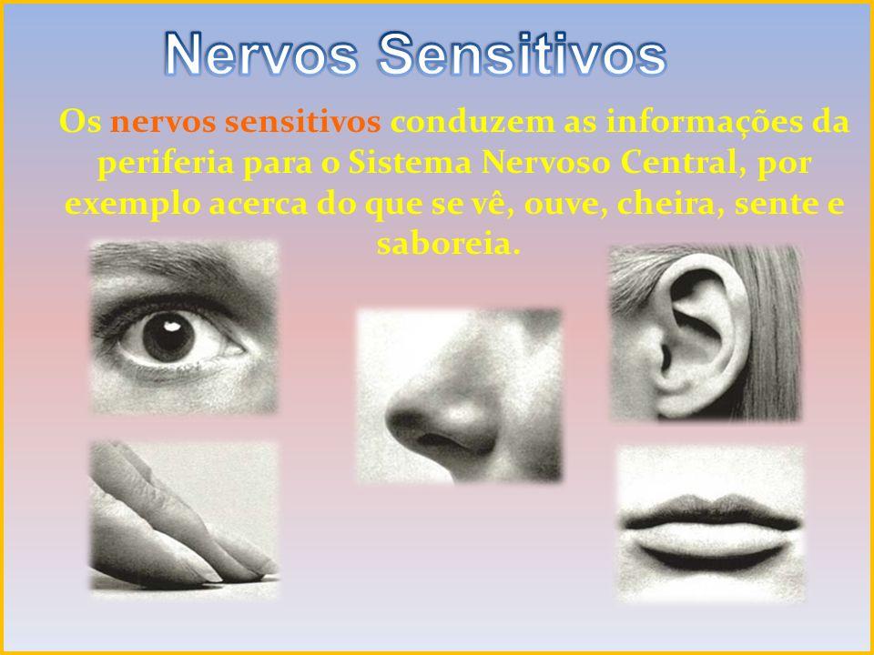 Os nervos sensitivos conduzem as informações da periferia para o Sistema Nervoso Central, por exemplo acerca do que se vê, ouve, cheira, sente e sabor