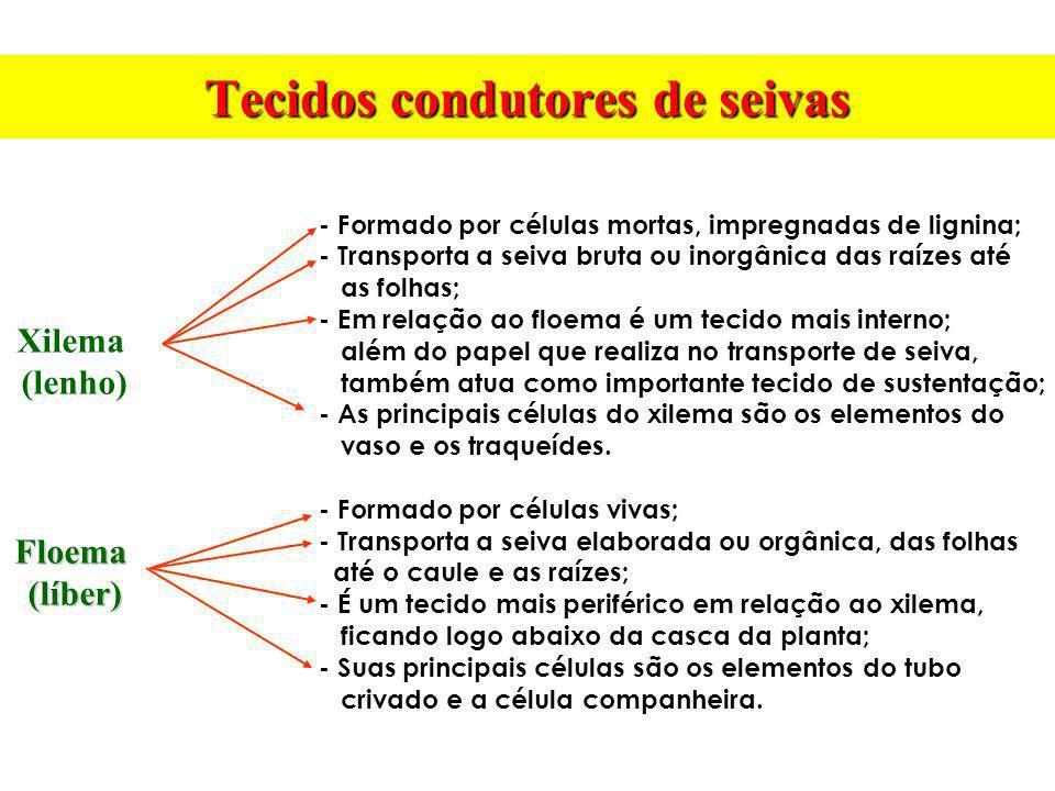 Tecidos condutores de seivas Xilema (lenho)Floema(líber) - Formado por células mortas, impregnadas de lignina; - Transporta a seiva bruta ou inorgânic