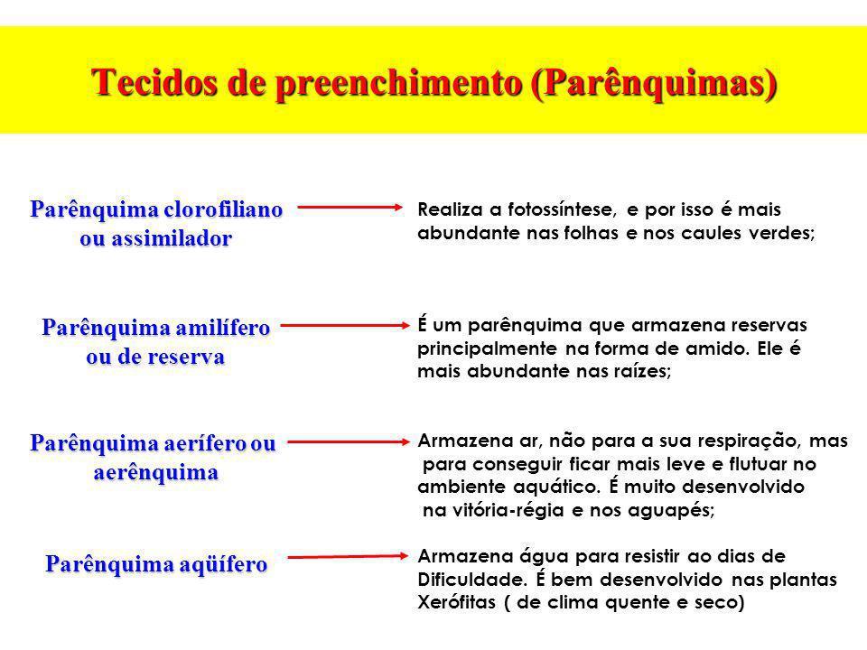 Tecidos de preenchimento (Parênquimas) Parênquima clorofiliano ou assimilador Parênquima amilífero ou de reserva Parênquima aerífero ou aerênquima Par