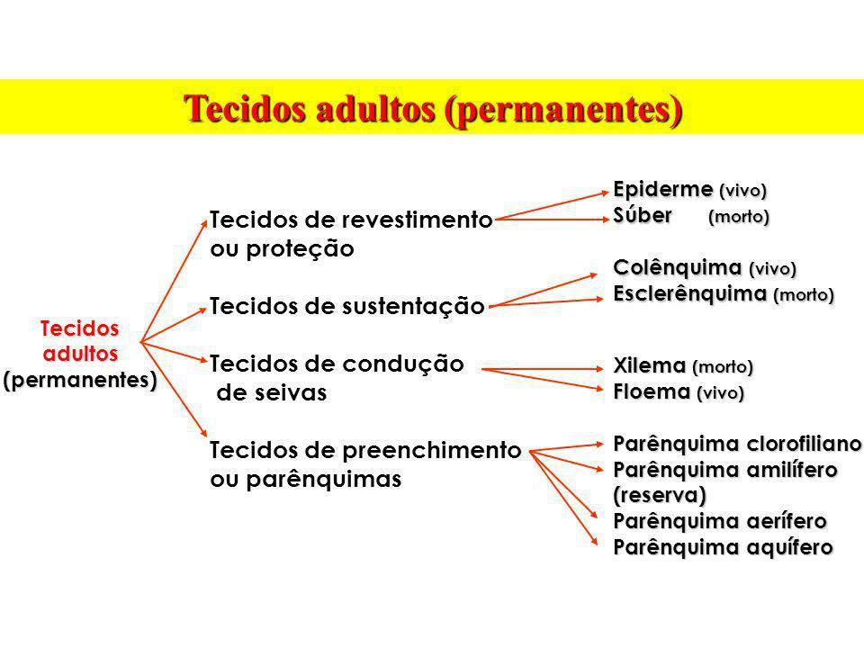 Tecidos de revestimento ou proteção Tecidos de sustentação Tecidos de condução de seivas Tecidos de preenchimento ou parênquimas Tecidos adultos (perm