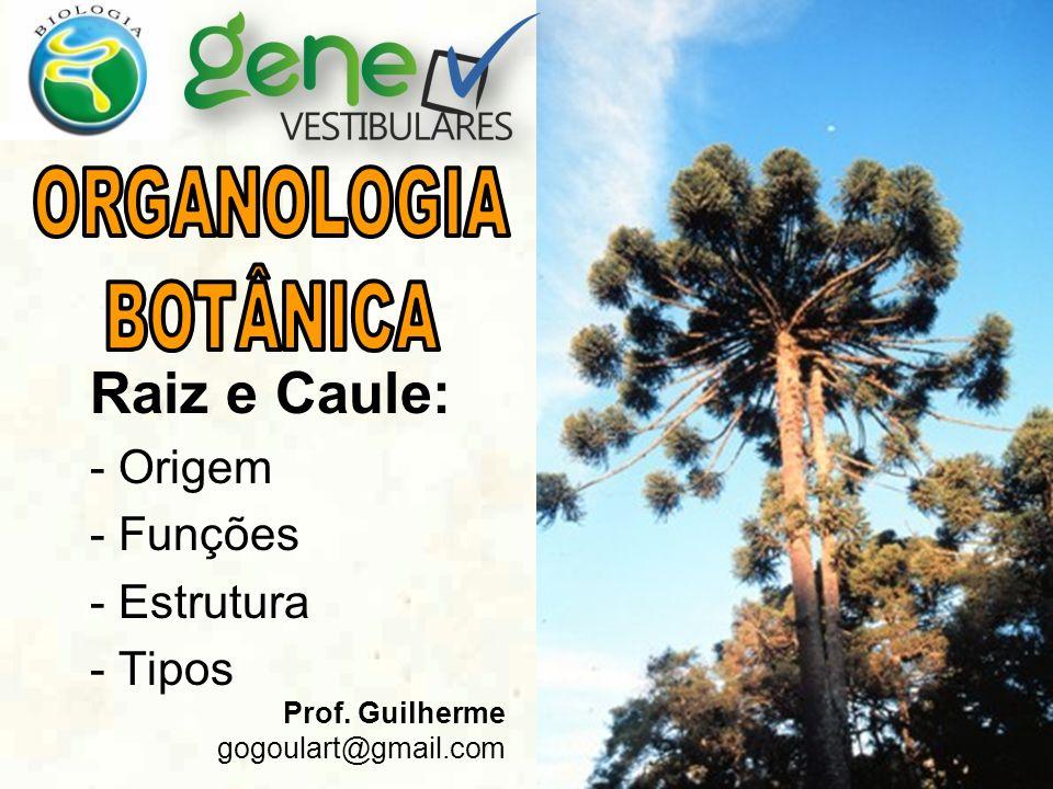 Raiz e Caule: - Origem - Funções - Estrutura - Tipos Prof. Guilherme gogoulart@gmail.com