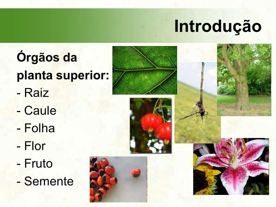 Introdução Órgãos da planta superior: - Raiz - Caule - Folha - Flor - Fruto - Semente