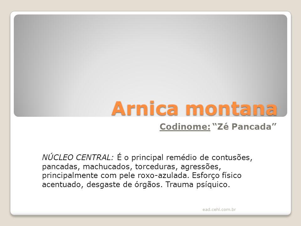 Arnica montana Codinome: Zé Pancada NÚCLEO CENTRAL: É o principal remédio de contusões, pancadas, machucados, torceduras, agressões, principalmente co