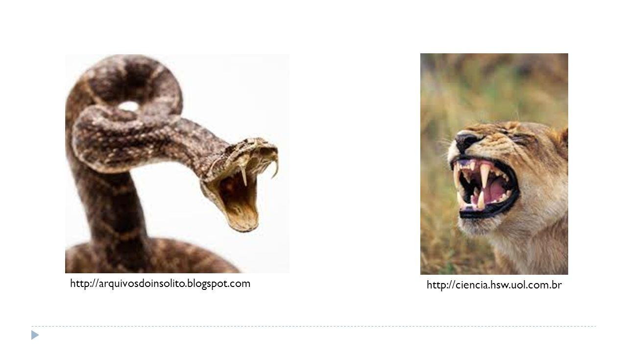http://ciencia.hsw.uol.com.br http://arquivosdoinsolito.blogspot.com