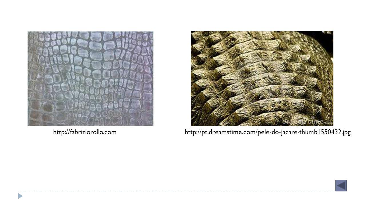 http://fabriziorollo.comhttp://pt.dreamstime.com/pele-do-jacare-thumb1550432.jpg