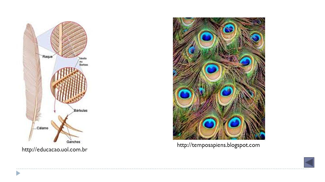 Grupos Répteis Mamíferos Crocodilianos Corpo com placas córneas 4 membros para se locomover Crocodilos e jacarés Escamados Corpo com escamas Cobras e lagartos Quelônios Corpo com carapaça e plastrão Tartarugas, jabutis e cágados Monotremados Mamíferos que põem ovos Ornitorrinco e equidna Marsupiais Desenvolvimento do embrião é feito, na maior parte do tempo, dentro de uma bolsa chamada marsúpio Cangurus, gambás, coalas Placentários Desenvolvimento do embrião ocorre dentro da fêmea, que apresenta a placenta Seres humanos, vacas, cachorros, golfinhos Aves Não tem*