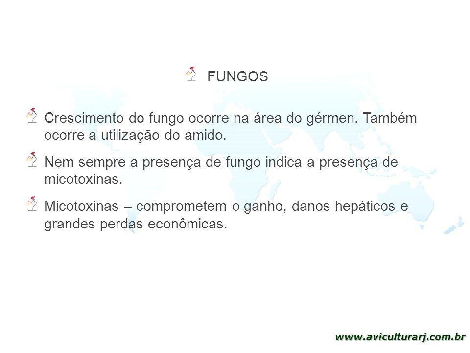 15 www.aviculturarj.com.br Crescimento do fungo ocorre na área do gérmen. Também ocorre a utilização do amido. Nem sempre a presença de fungo indica a