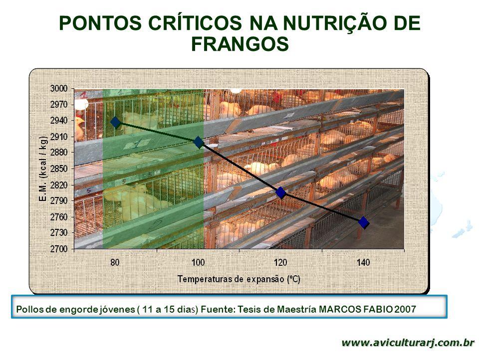 37 www.aviculturarj.com.br PONTOS CRÍTICOS NA NUTRIÇÃO DE FRANGOS Pollos de engorde jóvenes ( 11 a 15 dia s ) Fuente: Tesis de Maestría MARCOS FABIO 2