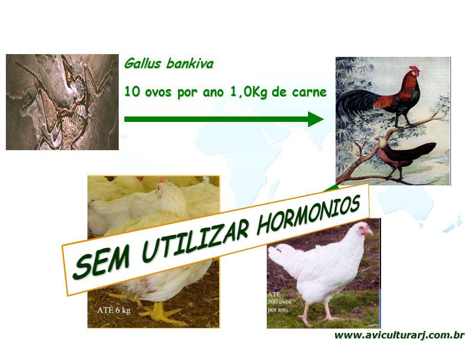 4 www.aviculturarj.com.br Gallus bankiva 10 ovos por ano 1,0Kg de carne