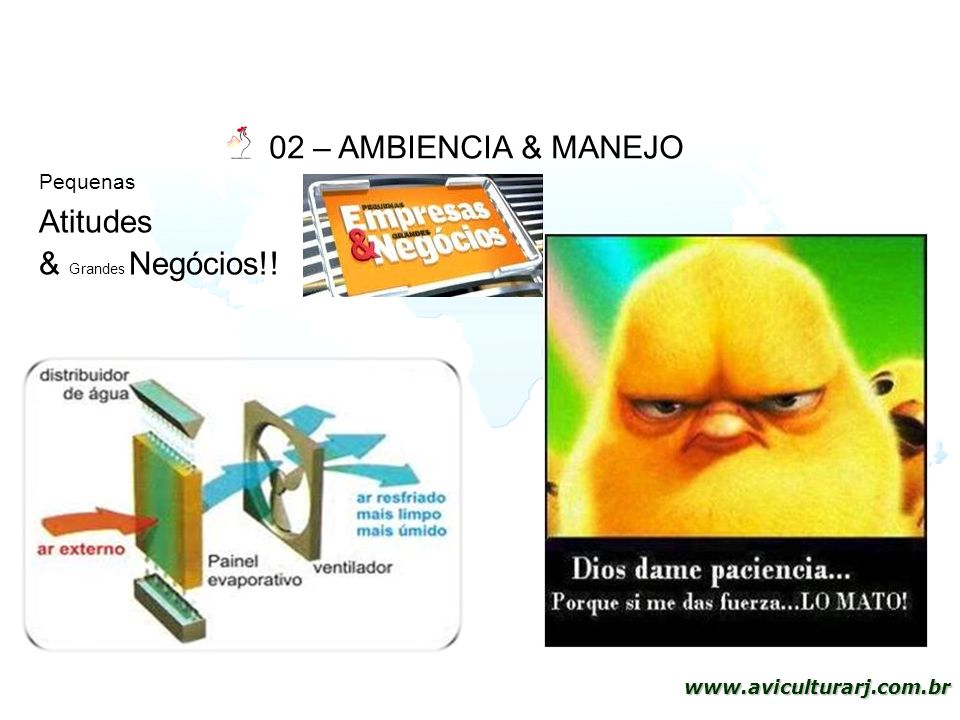 41 www.aviculturarj.com.br 02 – AMBIENCIA & MANEJO Pequenas Atitudes & Grandes Negócios!!