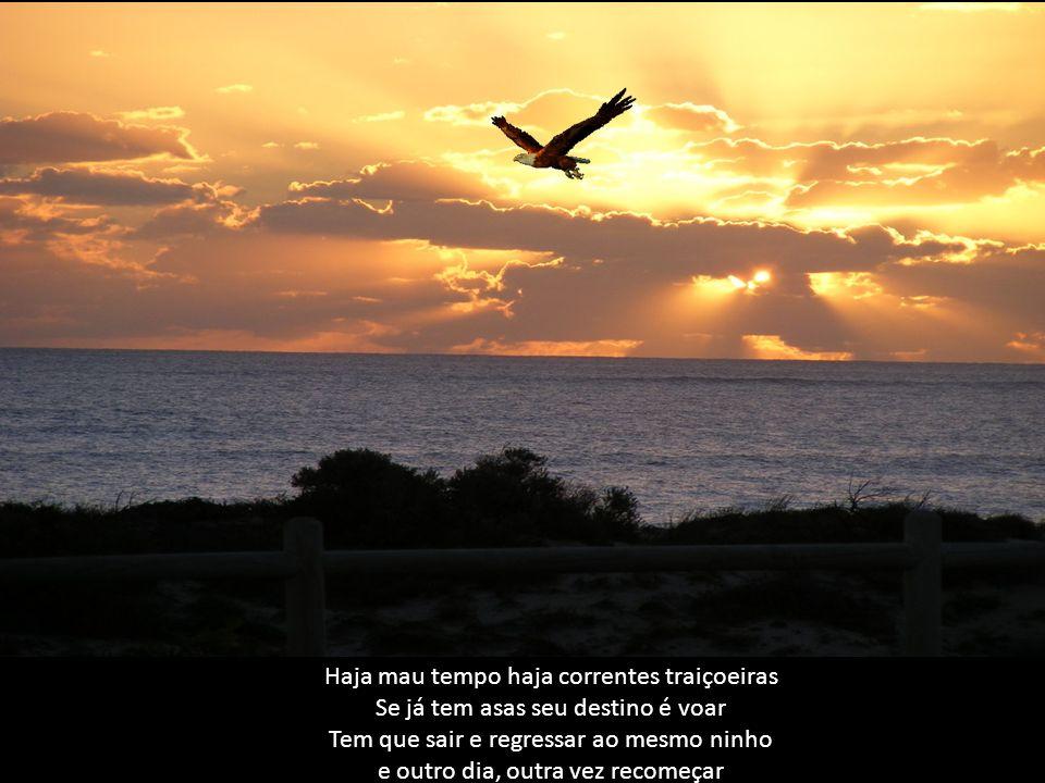 Pequenas águias correm risco quando voam, mas devem arriscar só que é preciso olhar os pais como eles voam e aperfeiçoar