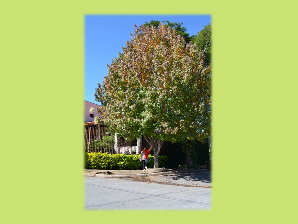MULHERES SÁBIAS Amanhece, a frondosa e antiga árvore recebe os primeiros raios, suas raízes, majestosas, penetram o solo profundamente. Seus frutos, é