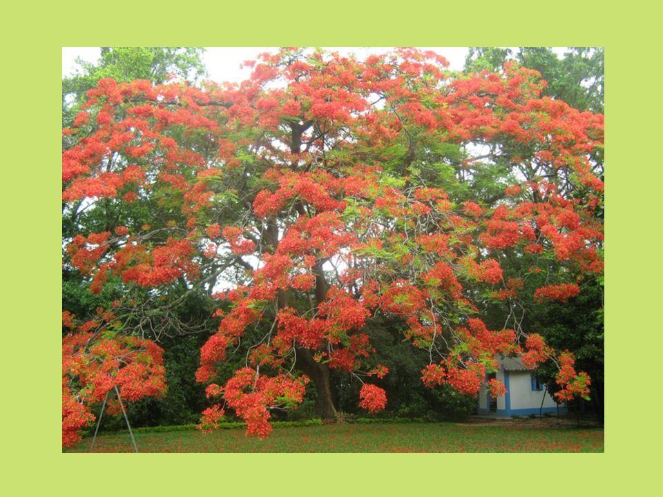 Rosário de Sonetos Geir Campos Soneto II Num tempo dúplice de abril e outubro com simultâneas florações e safras perfumando alamedas, surpreendido qua