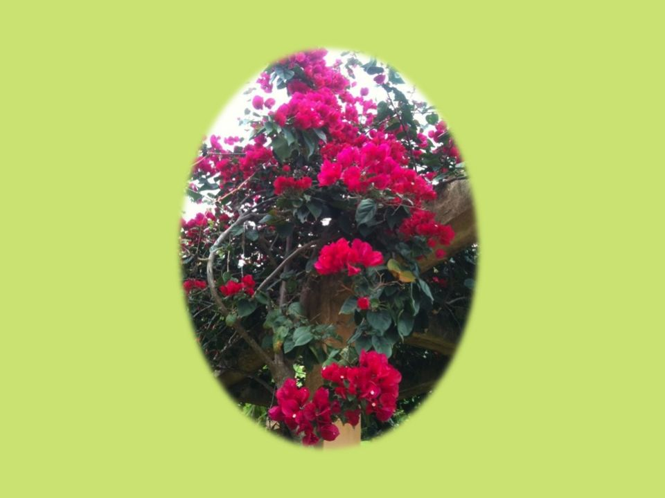 Um rizoma não começa nem conclui, ele se encontra sempre no meio, entre as coisas, inter-ser, intermezzo. A árvore é filiação, mas o rizoma é aliança,