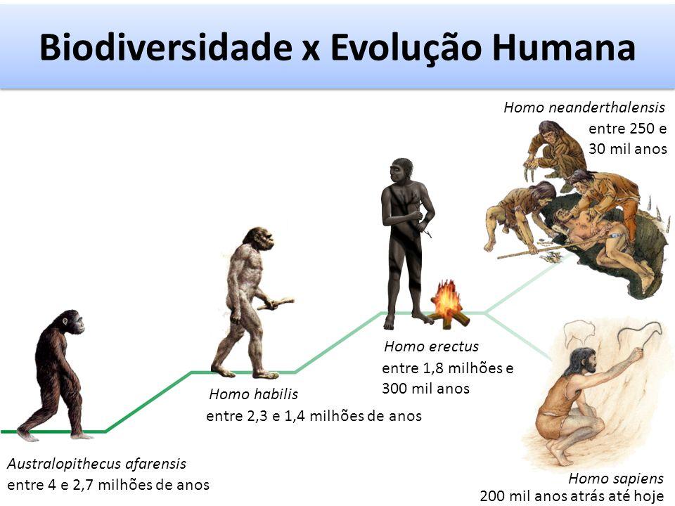 Biodiversidade x Evolução Humana Australopithecus afarensis Homo habilis Homo erectus Homo sapiens Homo neanderthalensis entre 4 e 2,7 milhões de anos 200 mil anos atrás até hoje entre 2,3 e 1,4 milhões de anos entre 1,8 milhões e 300 mil anos entre 250 e 30 mil anos