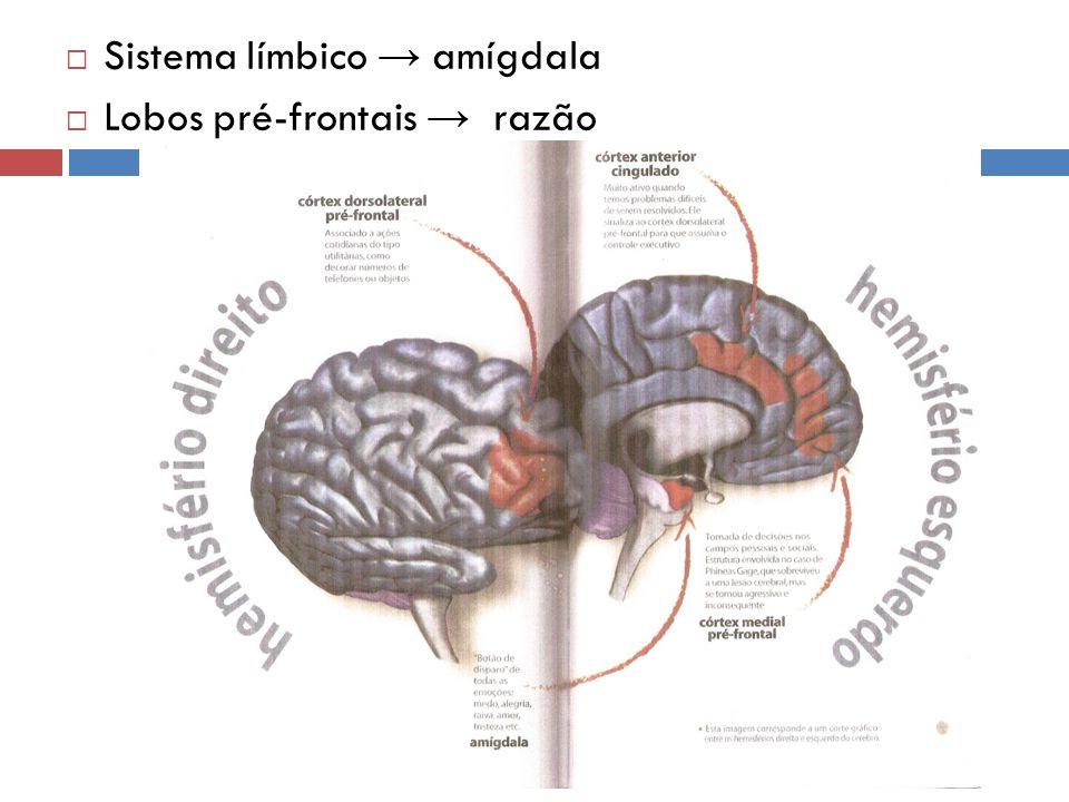 Sistema límbico amígdala Lobos pré-frontais razão