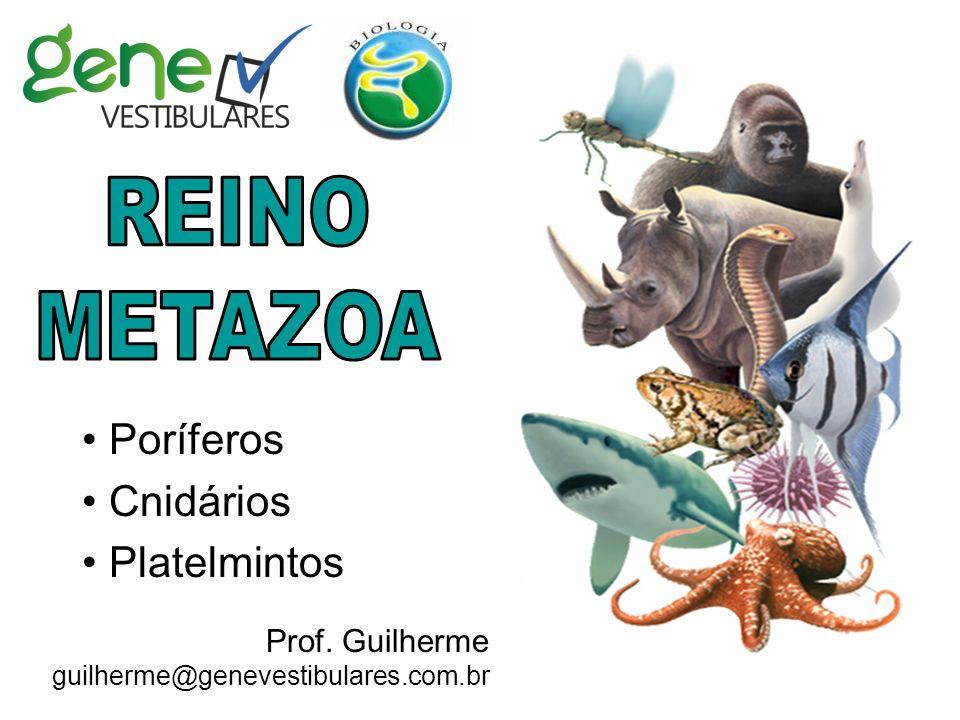 Poríferos Cnidários Platelmintos Prof. Guilherme guilherme@genevestibulares.com.br
