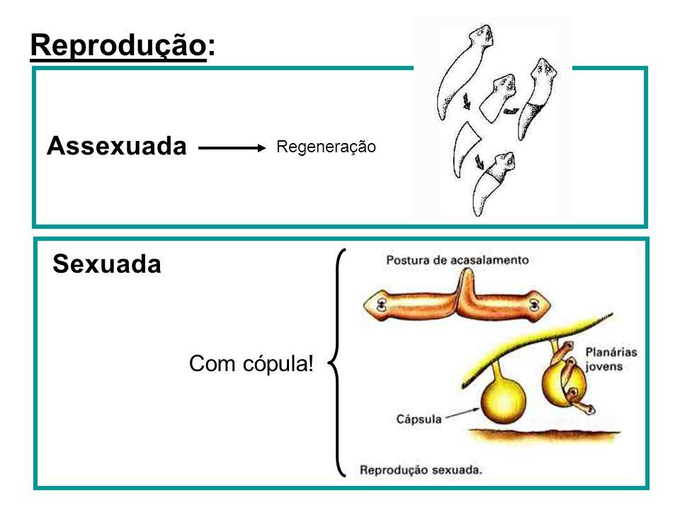 Reprodução: Assexuada Regeneração Sexuada Com cópula!